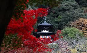 京都 ライトアップ