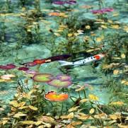 モネの池 行き方